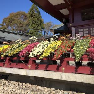 【モトブログ】笠間菊祭と隠れ家食堂