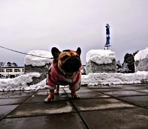 降って解けて降って解けて、少しづつ積雪
