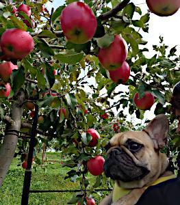 りんご狩り2021
