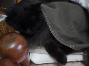 老猫はエアウィーブがお好き