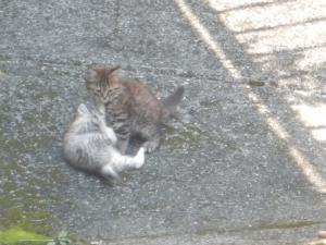 子猫見つけた
