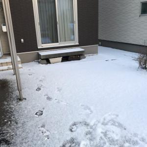 雪は何処? その後⑦