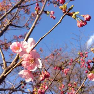 ❂京都の春❂