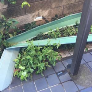 すごい台風でした