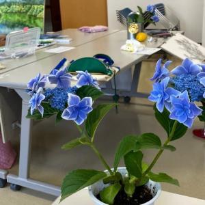 6月より絵画教室通常開催です!