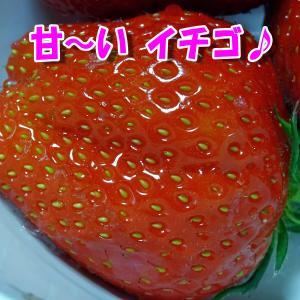 甘~い イチゴ ♪