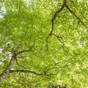 新緑まぶしい季節