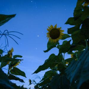 星空と太陽