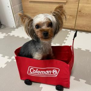 Colemanワゴン
