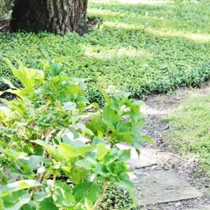 最近の裏庭のこと。。。