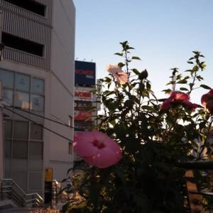 横須賀 お楽しみBOX 株式会社八天堂