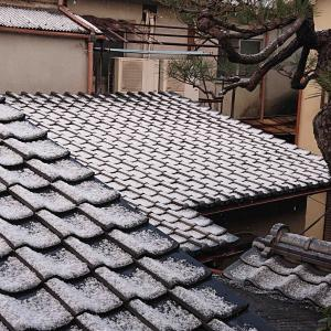 やっと降った雪の日に当たらんきき酒(^^ゞ