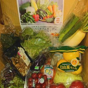 もったいない野菜ボックスでヘルシー晩ごはん