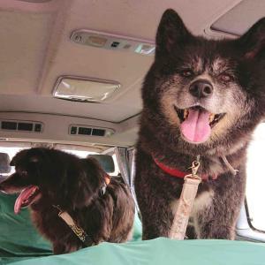 里山の「つむぎ」で犬連れランチ