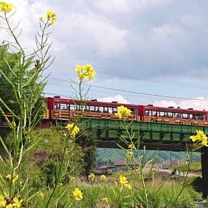 薫風にトロッコ列車、そして京都のかしわ餅