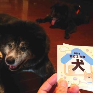 今年も京都の犬に