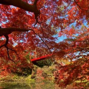 コロナ禍の秋