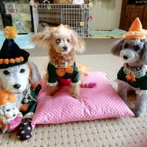 TricK  or  Treat~♪