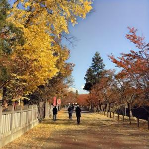 上田城跡公園の紅葉