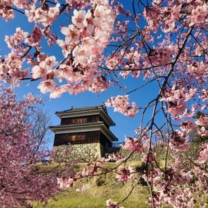 芝生公園のヤマザクラ (長野県上田市・上田城跡公園)