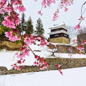 雪と桜 (長野県上田市・上田城跡公園)