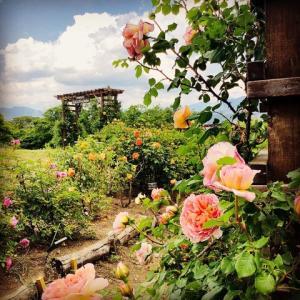 信州国際音楽村のバラ園 (長野県上田市)