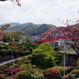 2020桜巡り(四)