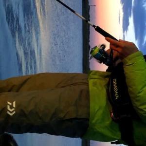 久々の釣行記・マメイカ狙い渋った・・・