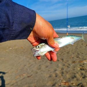マツカワ釣り・・毎年外しまくり
