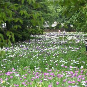 赤堀花しょうぶ園