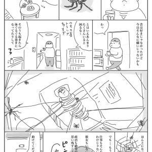 クモとの共存は難しい