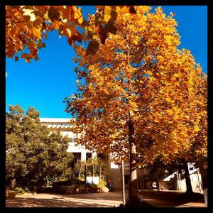 秋は身近に