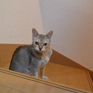 エルマー君 猫部屋 脱出?