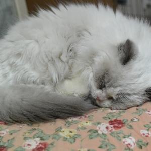 安心して寝ています