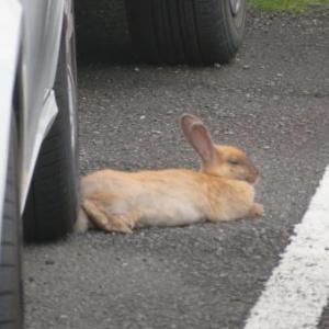 ウサギが1羽2羽 !