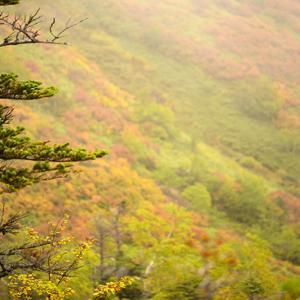 日本で一番早く見られる紅葉☆9月中旬に大雪山に「日帰りバスツアー」を使って行ってきました