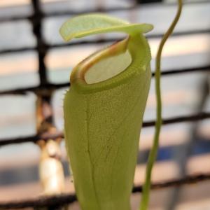 N.xMedusa