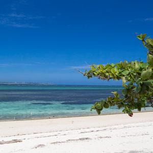 沖縄3日目はフクギ並木と古宇利島へ