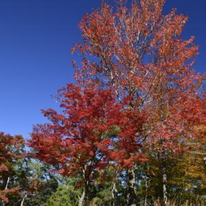 紅葉が綺麗 浜北森林公園