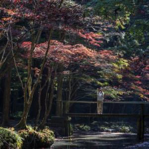 小国神社 大洞院紅葉