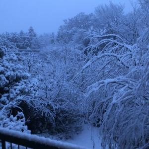 2020年1月18日 雪降りました