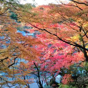 松ヶ岡公園の紅葉