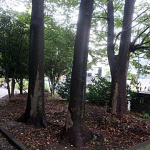 【濡れた木々が出迎えてくれた公園】でありました。