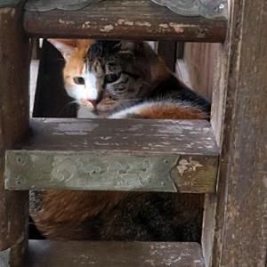 【欄干のあいだからのぞいていた猫】がいました