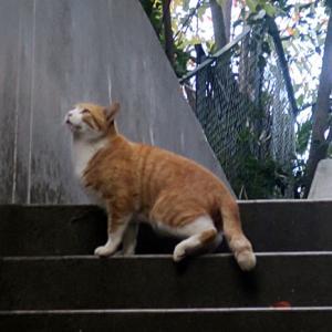 【階段の上にいた猫】ヒョコっていう感じで飛んでいきました。