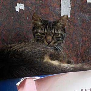 【自販機の上に寝ていた猫】がいました。