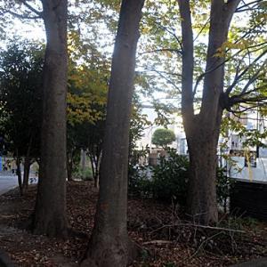 【気持ちの良さそうな公園】でありました。