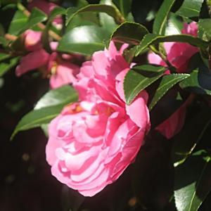 【日差しを浴びていた花たち】が咲いていました。