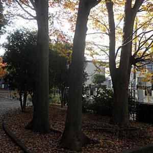 【晩秋っていう感じの公園】でありました