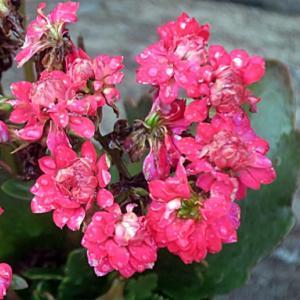 【雨が上がって元気そうになった花たち】が咲いていました。